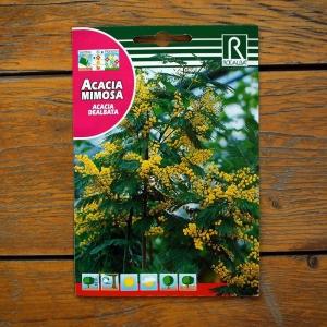 آکسایا نام علمی (Acacia Dealbata)