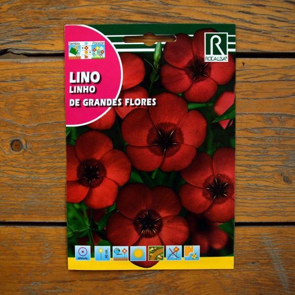 گل کتان سرخ