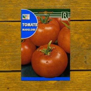 گوجه-فرنگی-رقم-MARGLOBE-