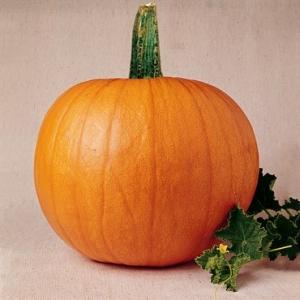 بذر کدو هالووینی
