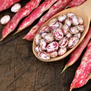 بذر لوبیا چیتی پاکوتاه رقم بورلوتو