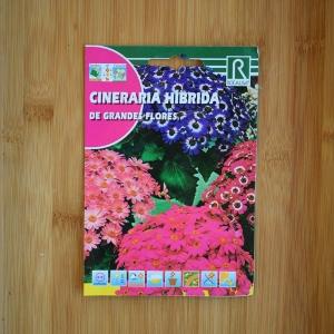 بذر گل سینرر یا سینره