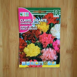 بذر گل میخک چند رنگ اِنفانت دِ نایس