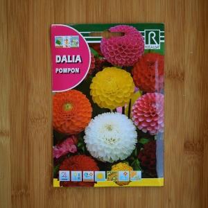 بذر گل کوکب منگولهای چند رنگ