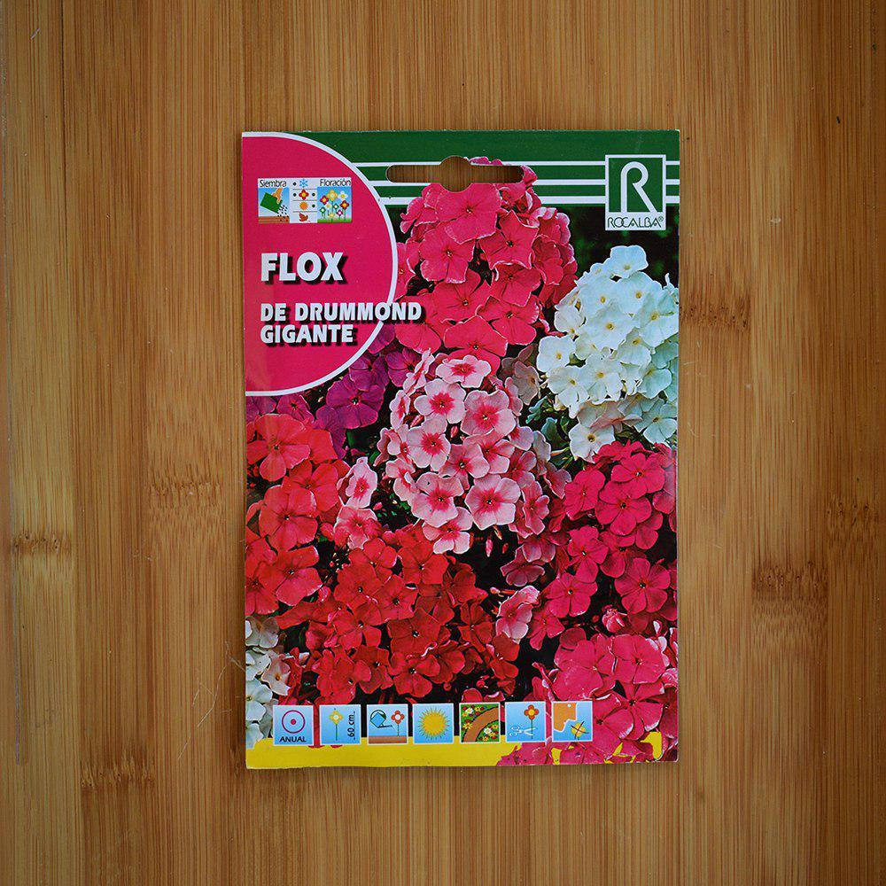 بذر گل فلوکس یا گل آتشی