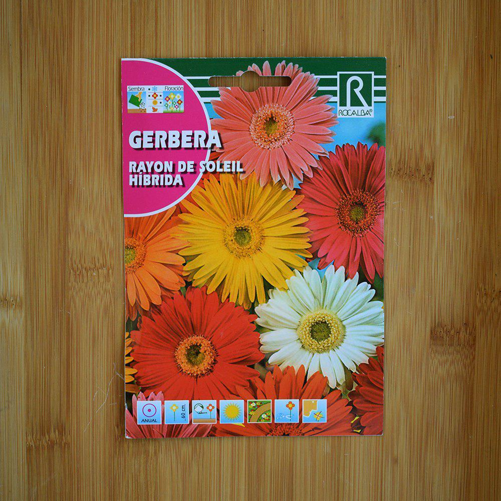 بذر گل ژربرا