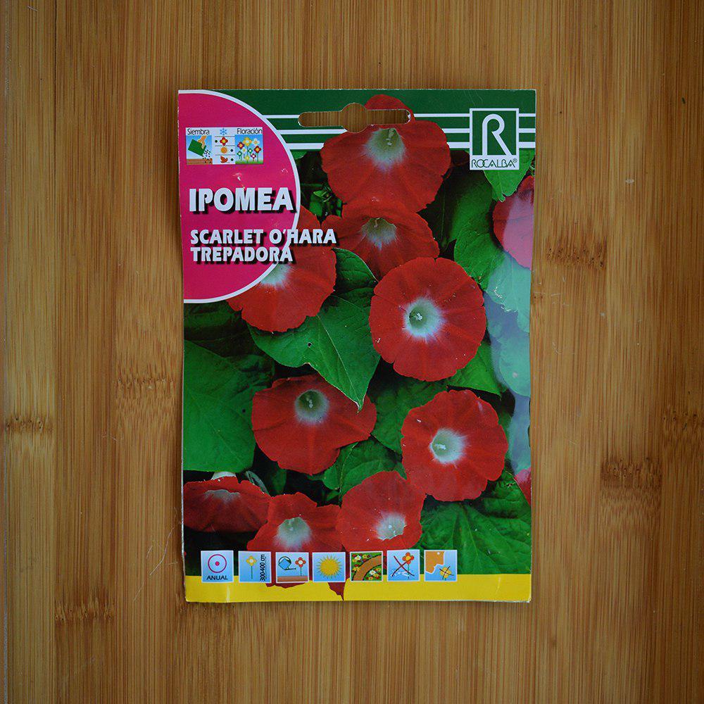 بذر گل نیلوفر پیچ سرخ