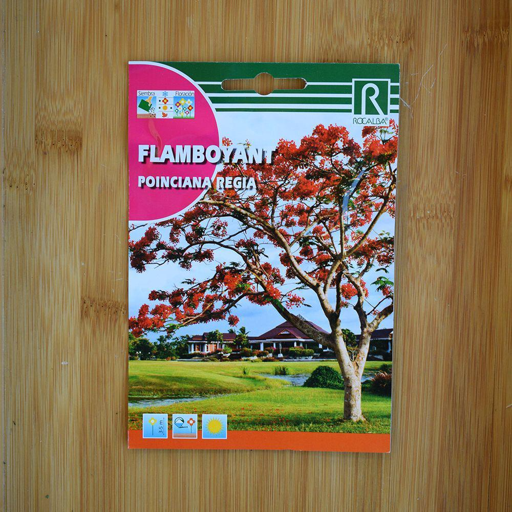 بذر کمیاب درخت آتش یا گل مور (Flamboyant)