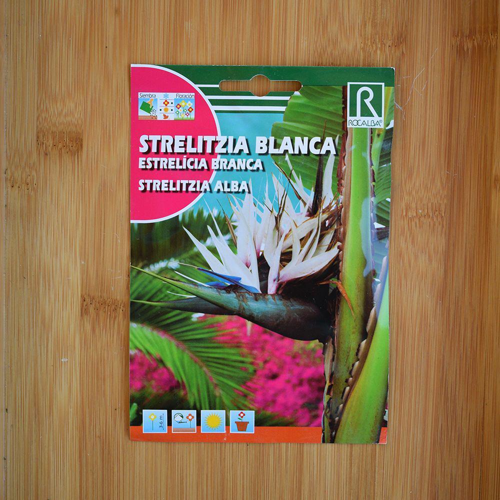 بذر کمیاب استرلیتزیا گل سفید یا پرنده بهشتی