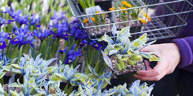 بذر گل فصلی و زینتی ، فروشگاه اینترنتی بذر