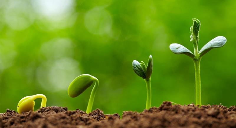 نکات مهم در هنگام انتخاب بذر خوب