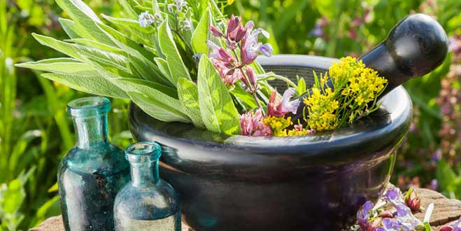 بذر گیاهان دارویی ، فروشگاه اینترنتی بذر