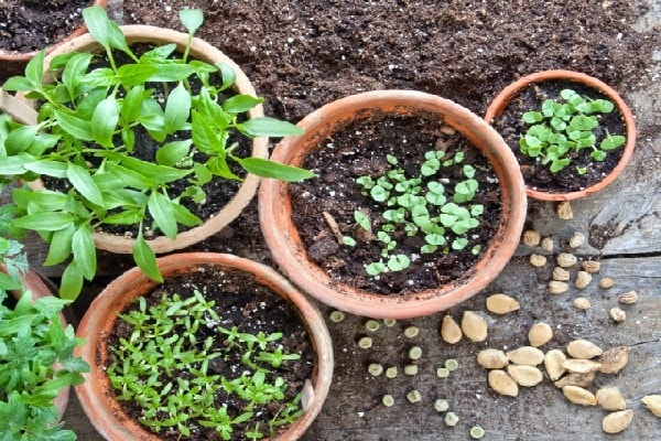 آموزش روش کاشت بذر سبزیجات در گلدان