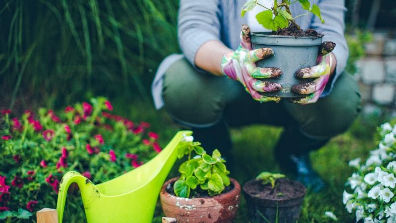آموزش کاشت بذر گل در گلدان و باغچه