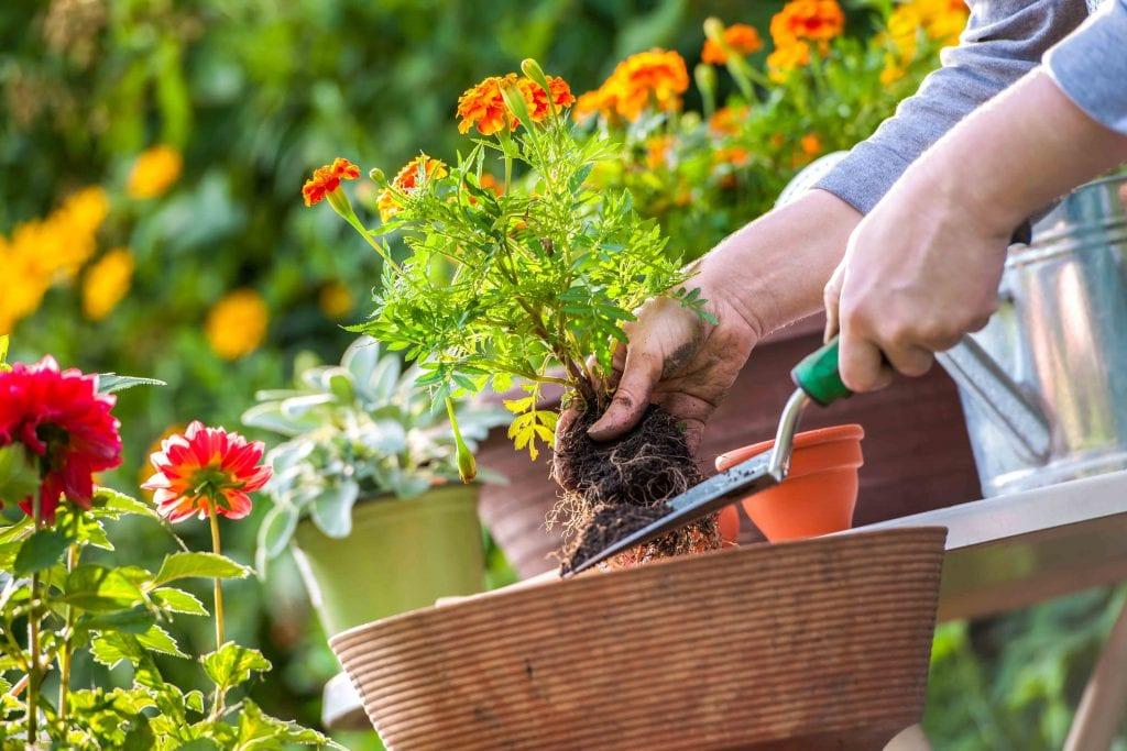 کاشت مستقیم بذر گل در گلدان