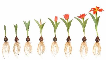 بذر گل مرغوب