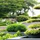 بذر درختان زینتی و پرورش آنها