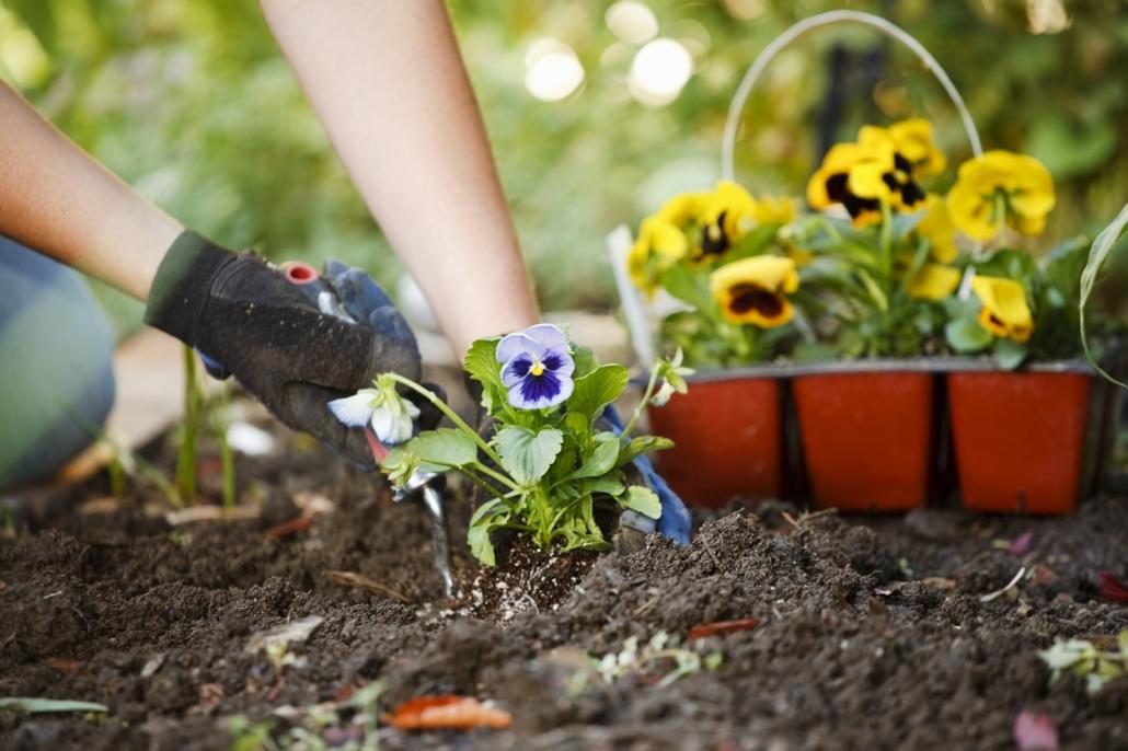 کاشت مستقیم بذر گل در باغچه