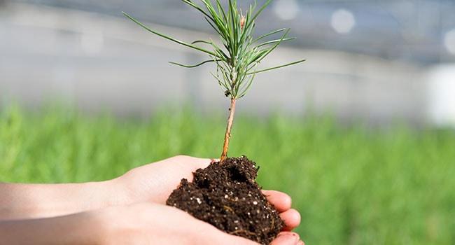 کاشت بذر درختان زینتی