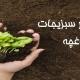 آموزش کاشت بذر سبزیجات در باغچه