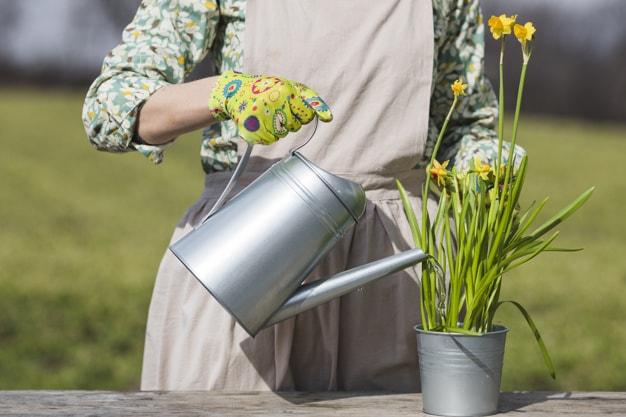 روش آبیاری گل و گیاه