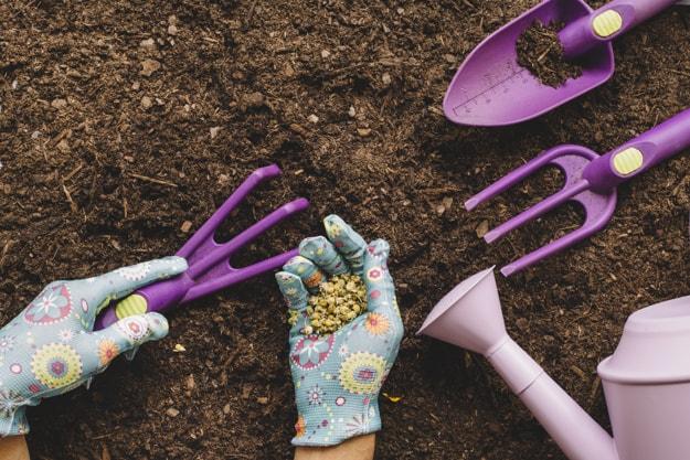 روش کاشت بذر گل زینتی