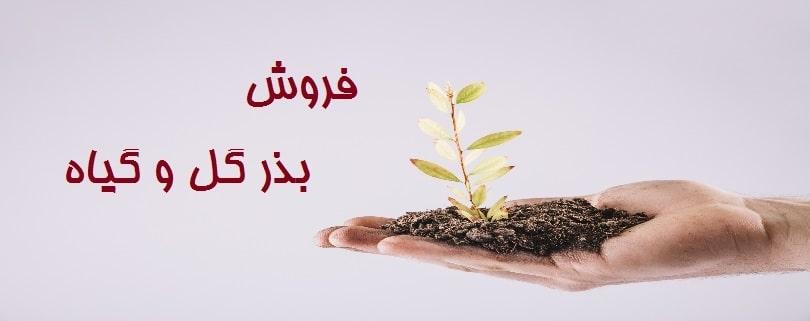 فروش بذر گل و گیاه