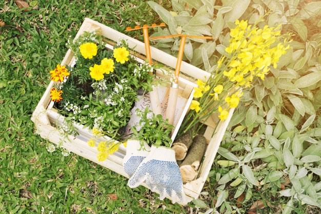 کاشت بذر گل