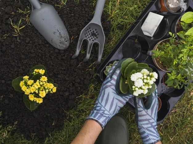 کاشت گل های زینتی در خارج از خانه