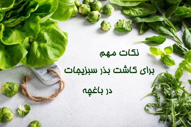 نکات مهم برای کاشت بذر سبزیجات در باغچه