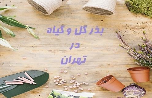 بذر گل و گیاه در تهران