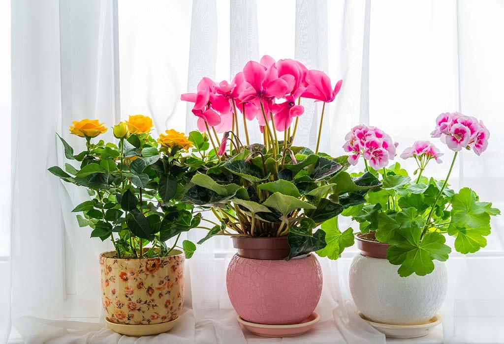 انواع بذر گلهای آپارتمانی