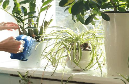 بذر گلهای آپارتمانی