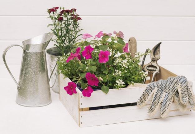 خرید اینترنتی بذر گل و گیاه