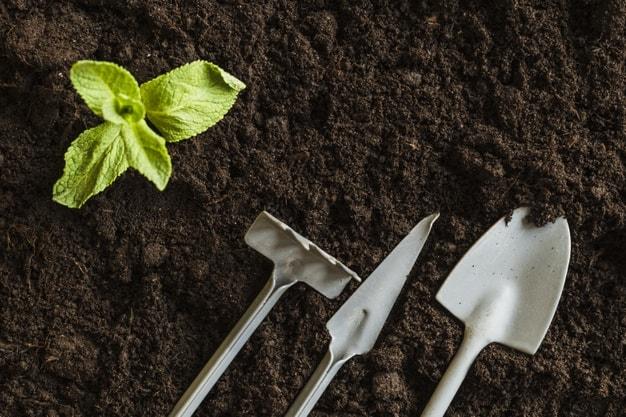 چگونه بذر سبزیجات بکاریم ؟