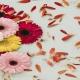 خرید بذر گل ژربرا