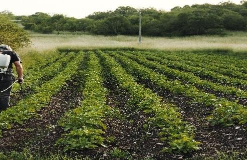 میزان بذر مصرفی سبزیجات در هکتار