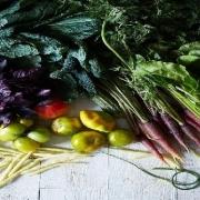 قیمت بذر سبزیجات