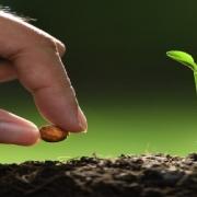 زمان کاشت بذر صیفی جات و سبزیجات