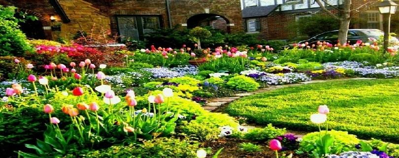 بذر گل برای حیاط