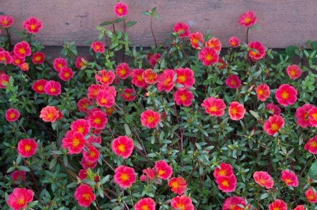 تکثیر و نحوه ی کاشت بذر گل ناز