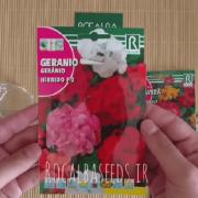 آموزش کاشت بذر گل شمعدانی