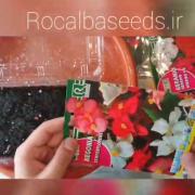 آموزش کاشت بذر گل بگونیا