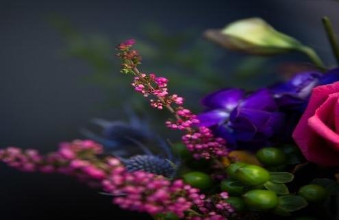 فروشگاه بذر گل زینتی