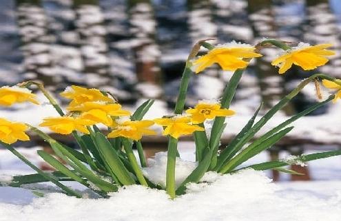 چه بذر گلی در زمستان بکاریم ؟