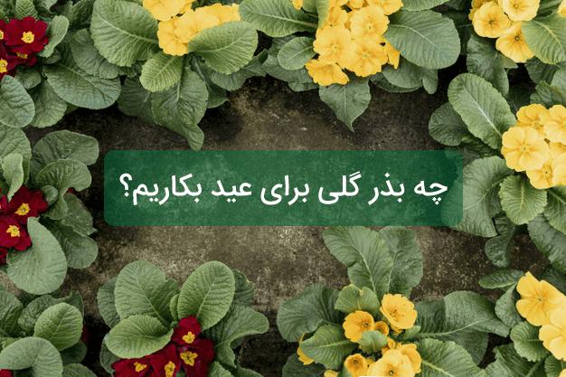 چه بذر گلی برای عید بکاریم ؟