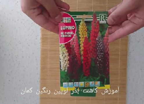 آموزش کاشت بذر گل لوپین رنگین کمان