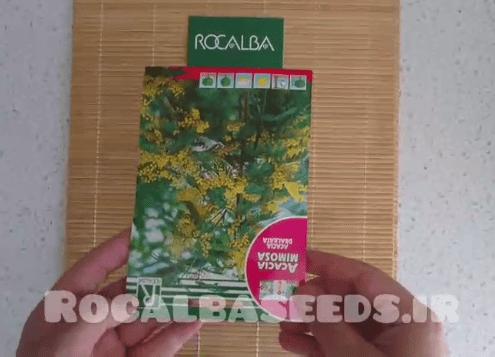 آموزش کاشت بذر درخت آکسایا میموسی فولیا