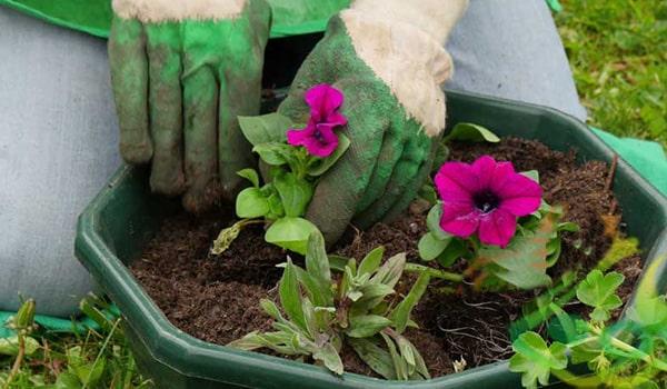 آموزش کاشت بذر گل اطلسی
