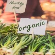 تهیه بذر سبزیجات